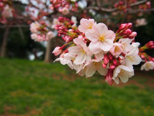 P3302024お花な~ん5