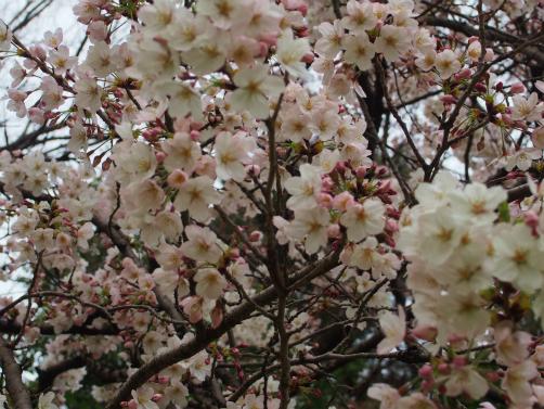 P3302027お花~ん4