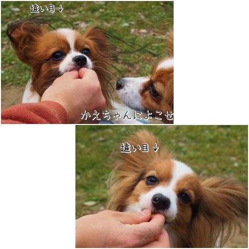 page花な~ん1