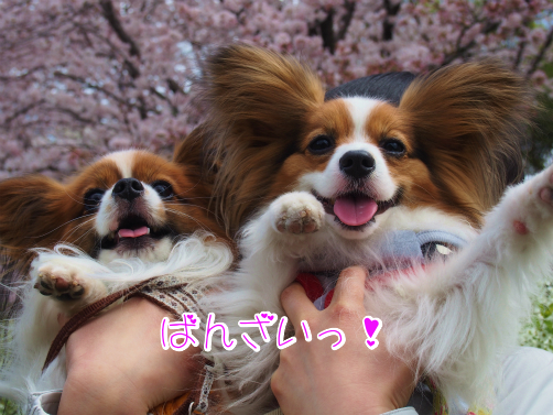 RPenEIcoお花な~7