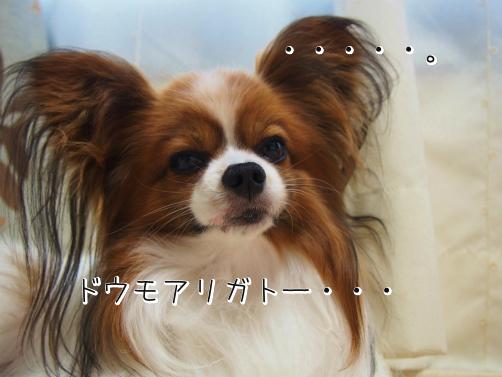 7VJVg7AYお礼5