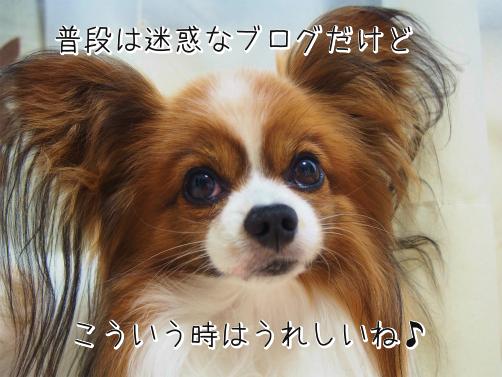 kBO3bD1uお祝い2