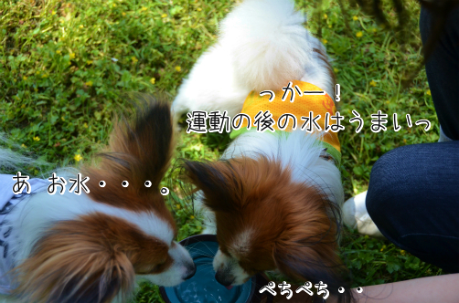 AP2_TwwPぼくじょ5