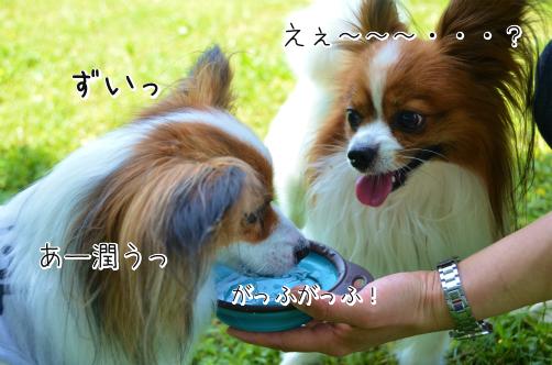 BsV24yDyぼくじょ6