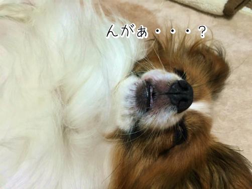 5Zs9Znmcまくら6
