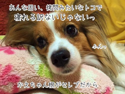 MoDi1neBひえひえ5
