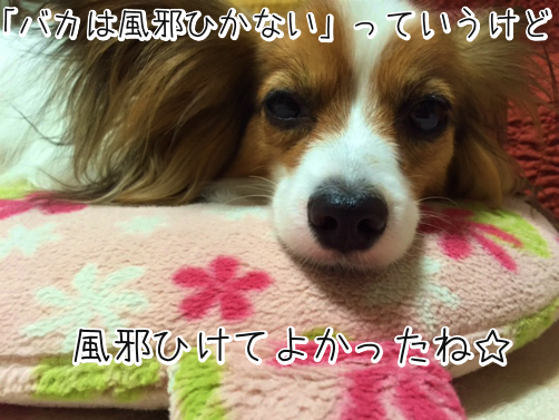 zjeYPsxg風邪1