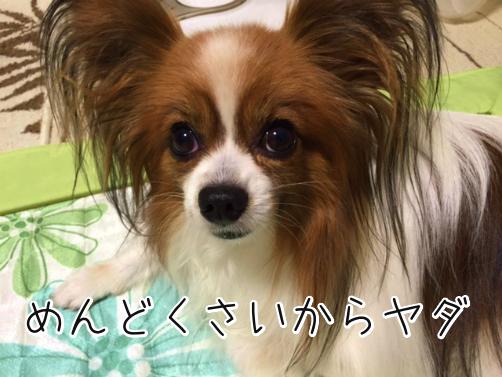 hBcUPE9m冒険4