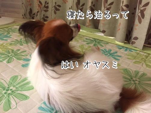 qTfccpfE冒険5