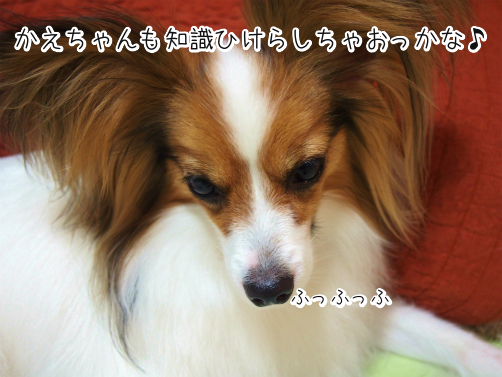 BBoQ6oil雑学5
