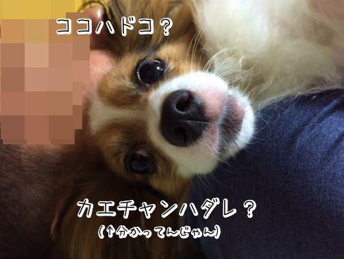 DOyjfVMNお勤め4