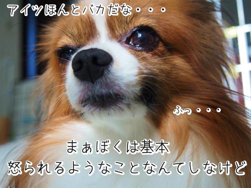 derDE3_zワンコ十戒3