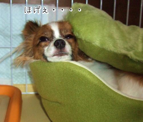 DlxYigyFほげぇ5