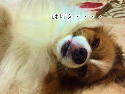 G3CX8vNoほげぇ3