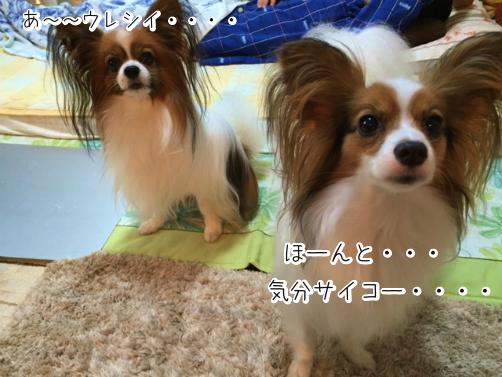 ZvLiHN3jちぇる5