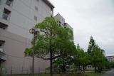 神戸市営名谷駅東住宅 曇りの250棟