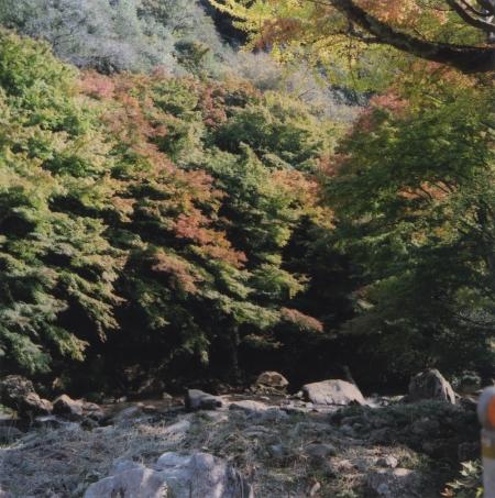 TOY-1848_Yashica.jpg