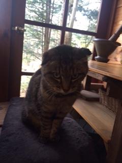 長野県 ハーバルノートシンプルズの猫ちゃん
