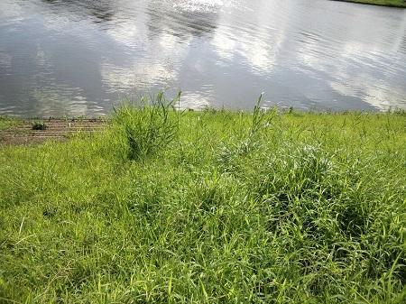 満水の中川