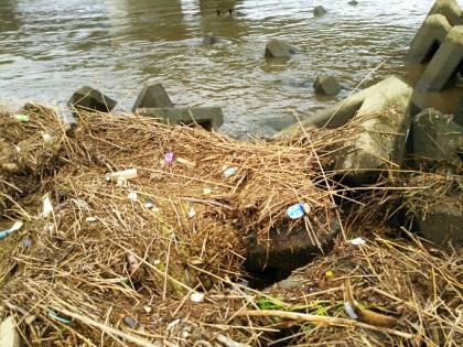 増水後の江戸川