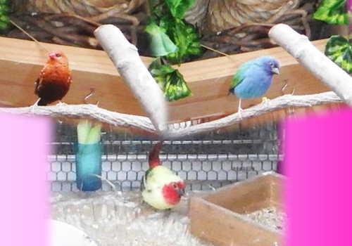 自育中の鳥達