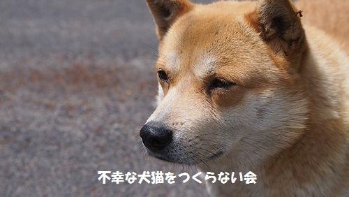 シバ太 (3)