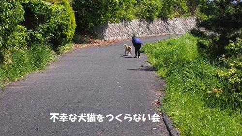 シバ太 (8)