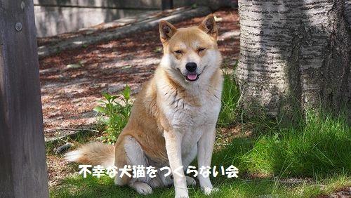 シバ太 (7)