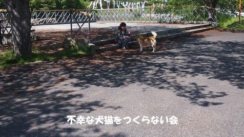 シバ太 (12)