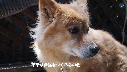 福麿 (3)