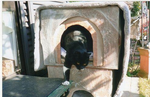 地域猫 (3)