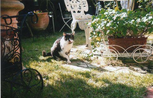 地域猫 (4)