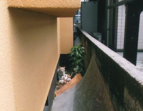 地域猫 (5)