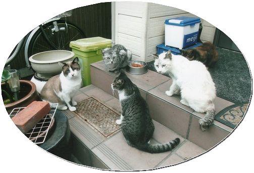 地域猫 (2)
