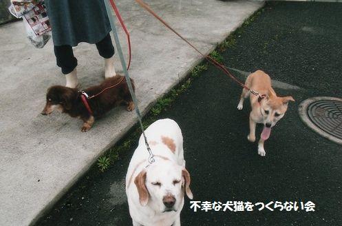 散歩 (3)
