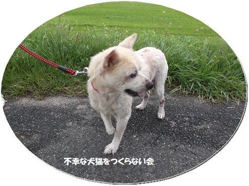 ちいちゃん (2)