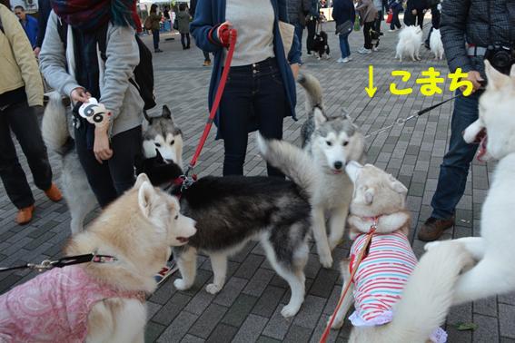 161106 日獣祭05