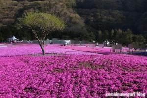 富士芝桜まつり3