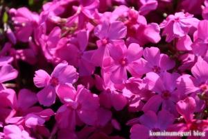 富士芝桜まつり5