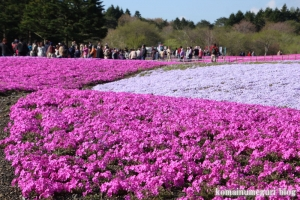 富士芝桜まつり14