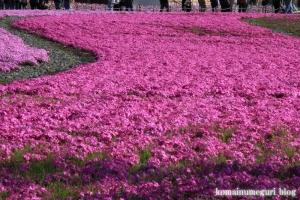 富士芝桜まつり29