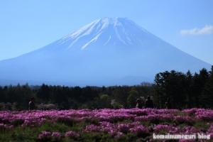 富士芝桜まつり31