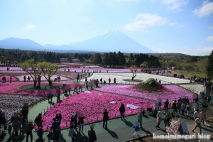 富士芝桜まつり34