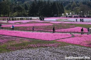 富士芝桜まつり35