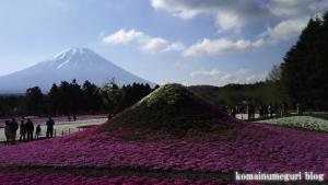 富士芝桜まつり47