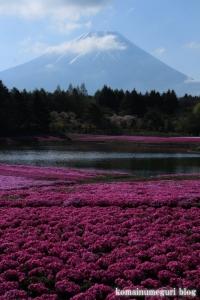 富士芝桜まつり19