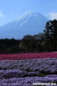 富士芝桜まつり22