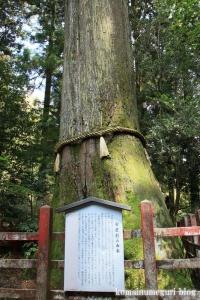 箱根神社(神奈川県足柄下郡箱根町元箱根)48