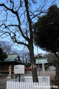 新曽氷川神社(戸田市氷川町)5