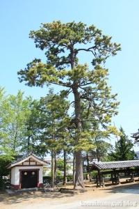 氷川神社(足立区古千谷本町)12